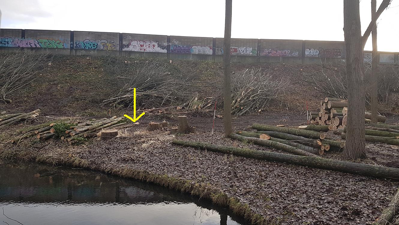 Nieuwe bomen voor teveel gekapte bomen