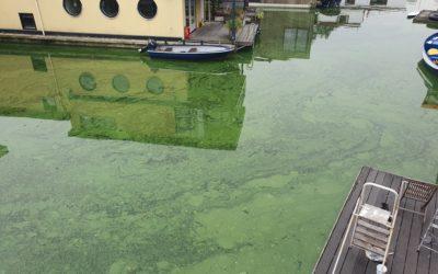 Reactie Rijnland op blauwalgen